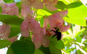 row by row, bit by bit; take time to smell the flowers—and watch the bees
